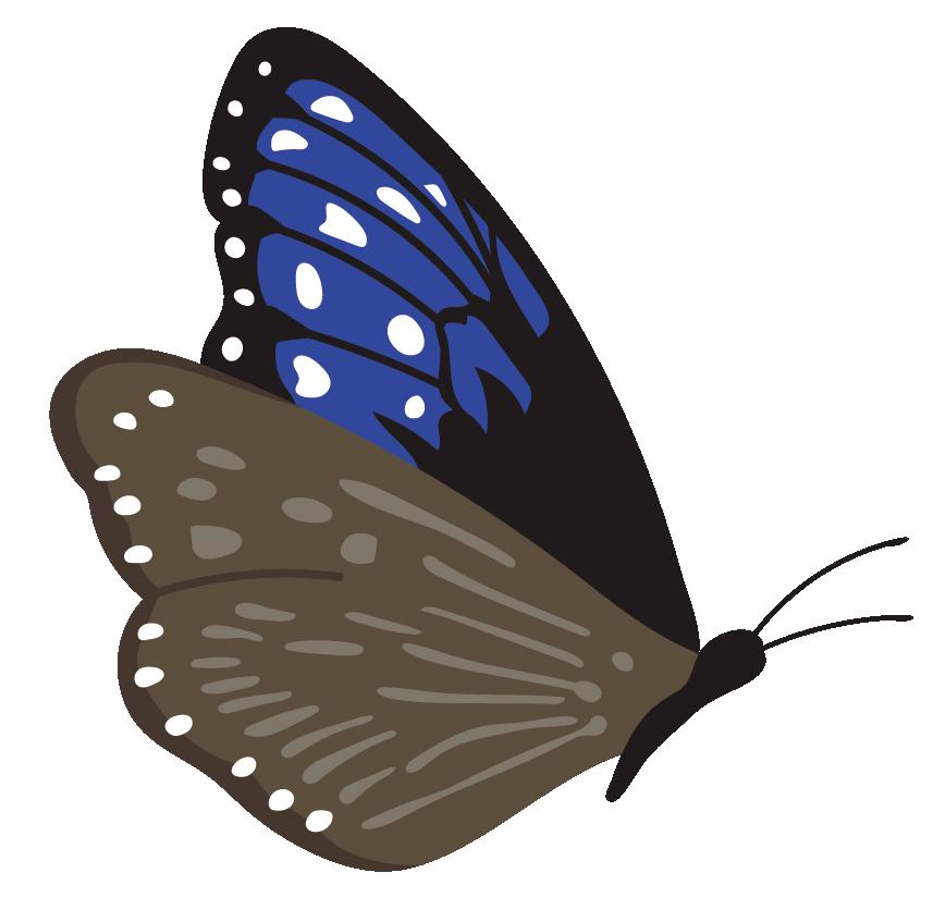 蝶2のイラスト