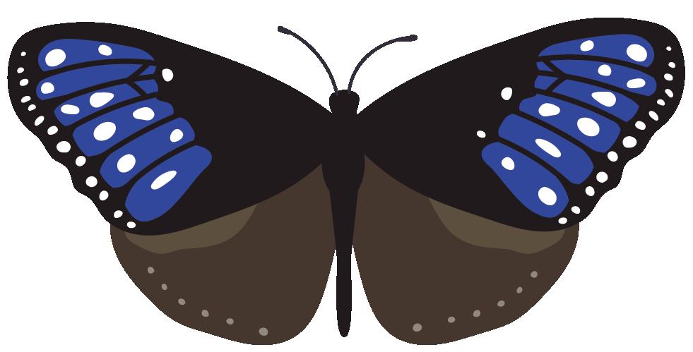 蝶3のイラスト