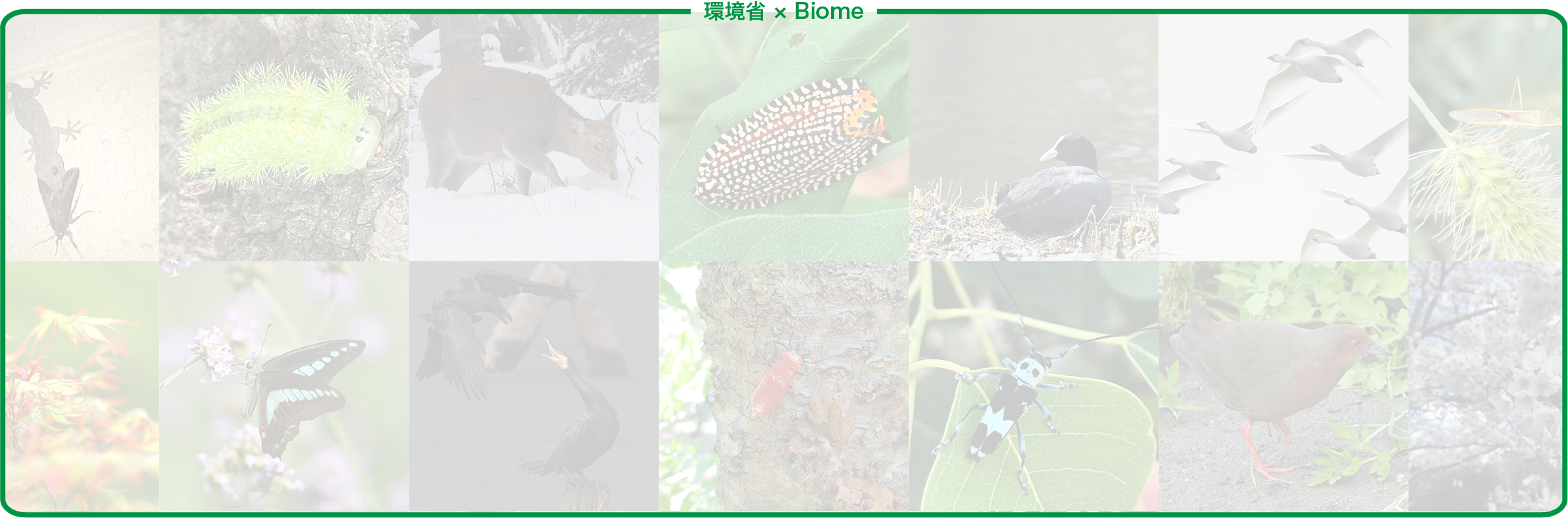 コンセプトPC用背景・色々ないきものの写真