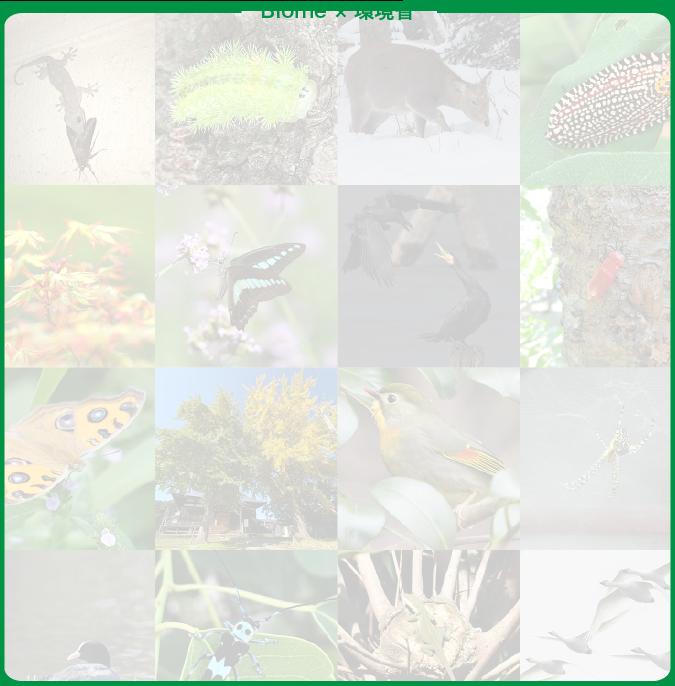 コンセプトスマホ用背景・色々ないきものの写真
