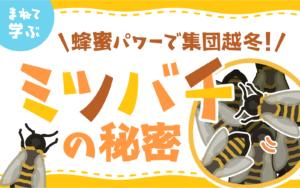 蜂蜜パワーで集団越冬!ミツバチの秘密
