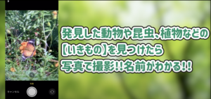 【動画】アプリの使い方を公開!