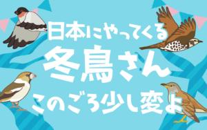 日本にやってくる冬鳥さん このごろ少し変よ